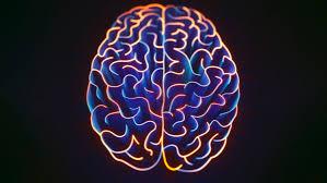 Chi soffre di autismo ha il cervello simmetrico
